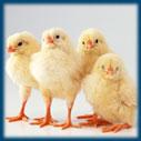 нагревательные кабели devi в сельском хозяйстве - подогрев для животных птиц теплиц